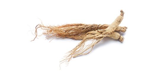 panax-ginseng-root.jpg